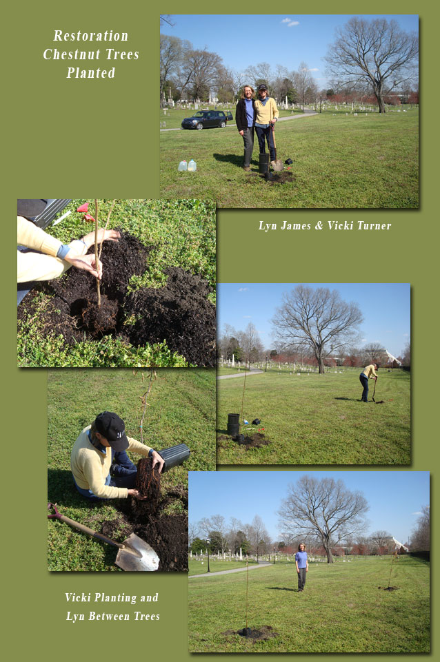 Chestnut Tree Planting